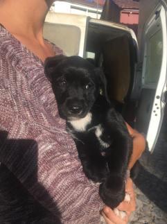 Pantera - adopted